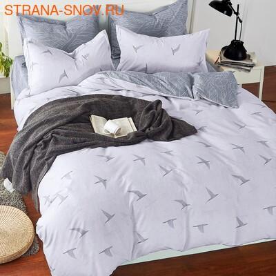 DF05-259-50 постельное белье микросатин Dream Fly семейное (фото)