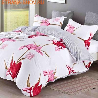 DF01-274 постельное белье микросатин Dream Fly 1,5-спальное (фото)